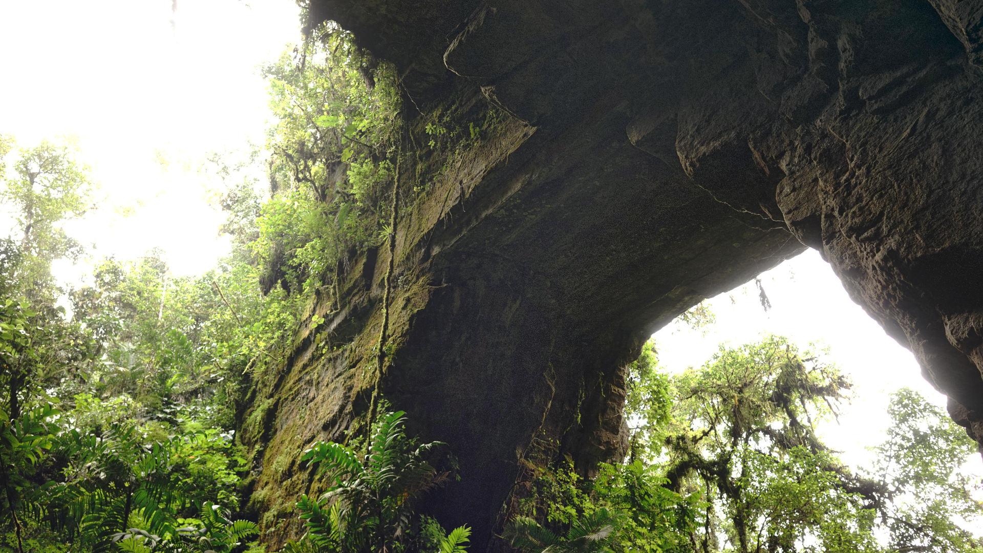 Cueva de los Guacharos
