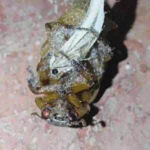 Escarabajo y Polilla