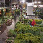 Mercado Nacional de las hierbas