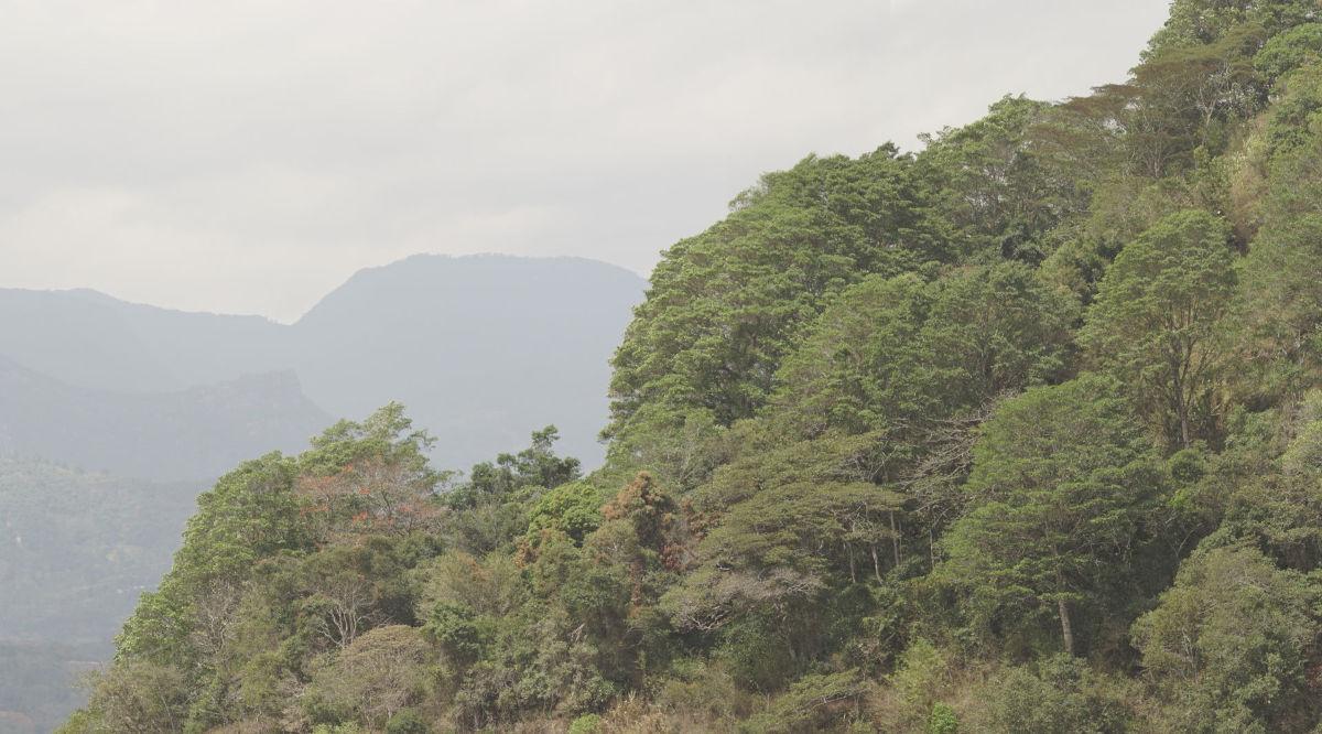 La Reserva el Tunjo
